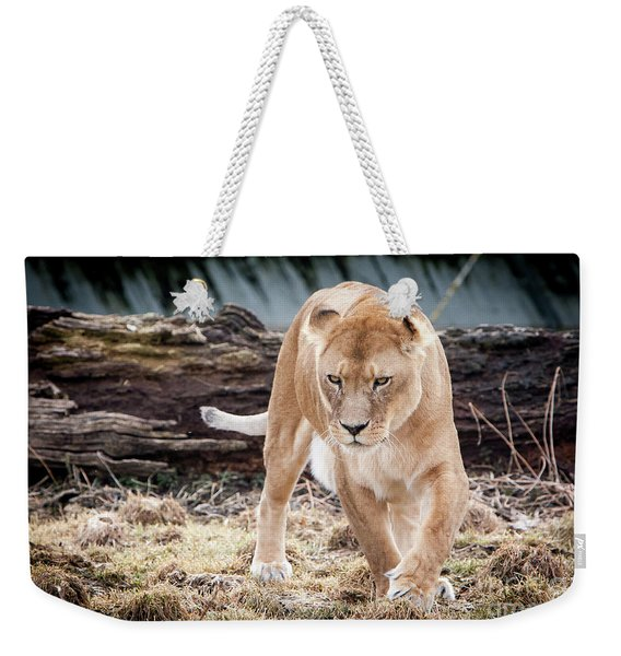 Weekender Tote Bag featuring the photograph Lion Eyes by John Wadleigh