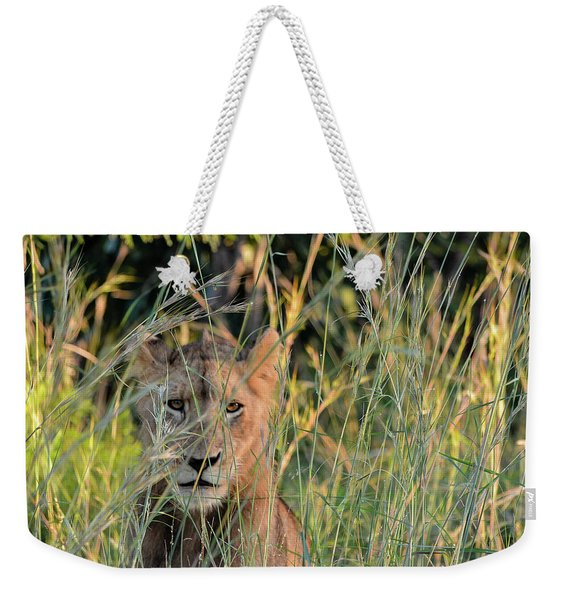 Lion Warily Watching Weekender Tote Bag