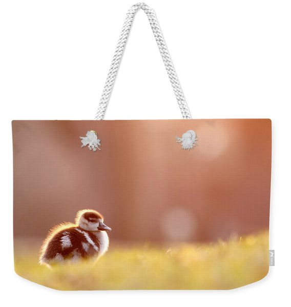 Little Furry Animal - Gosling In Warm Light Weekender Tote Bag