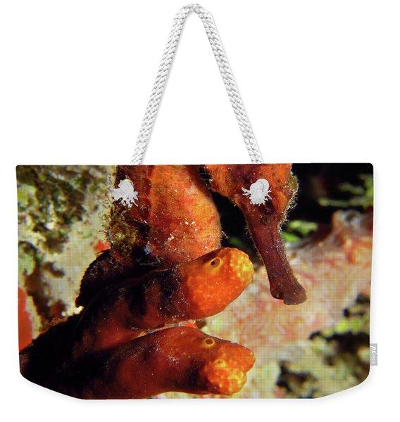 Longsnout Seahorse, St. Croix, U.s. Virgin Islands 2 Weekender Tote Bag