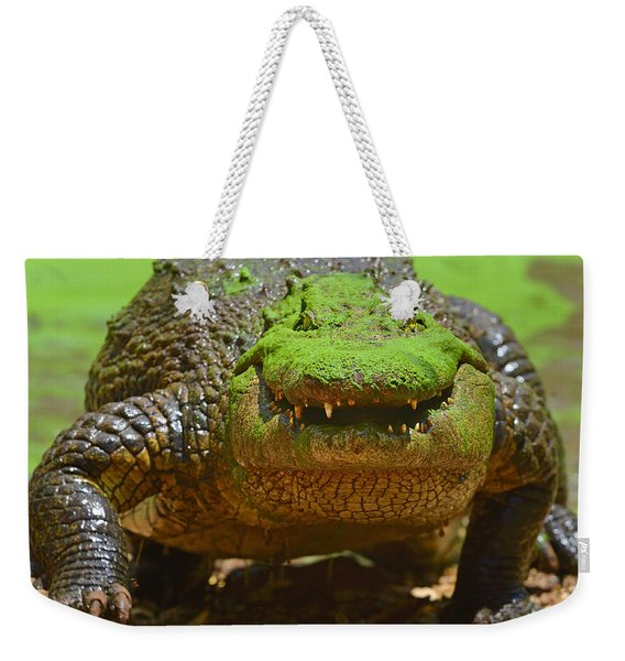 Looking For Lunch Weekender Tote Bag