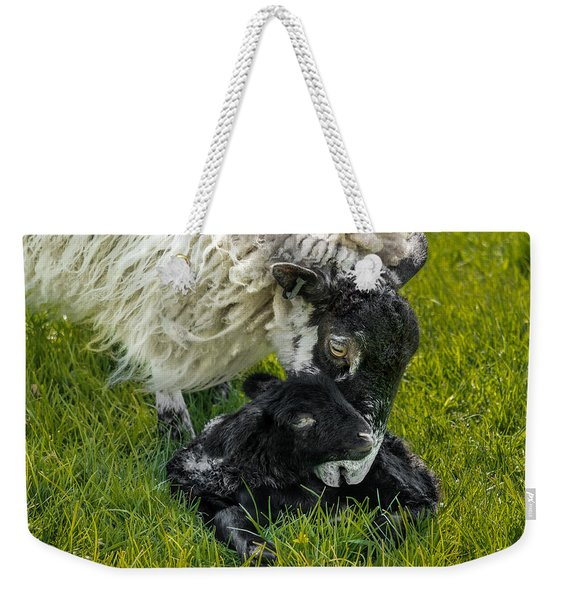 Weekender Tote Bag featuring the photograph Just Born by Nick Bywater