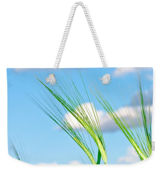 Lovely Image Of Young Barley Against An Idyllic Blue Sky Weekender Tote Bag