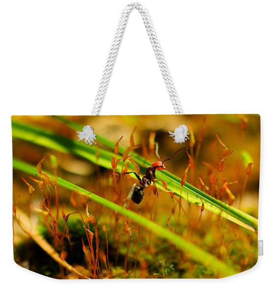 Macro Of An Ant Weekender Tote Bag