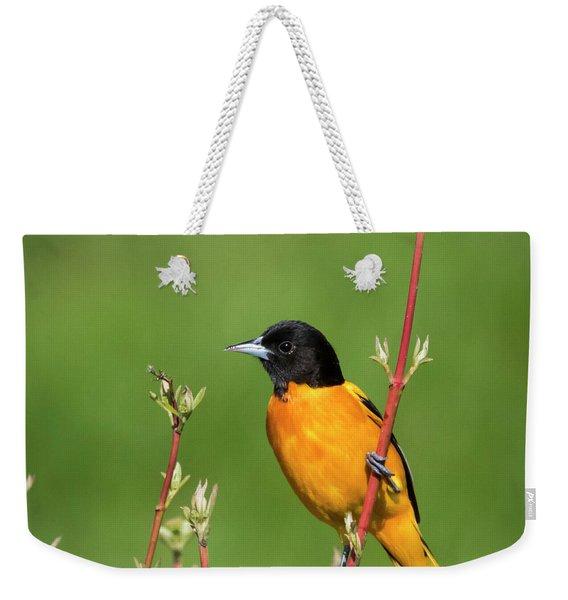 Male Baltimore Oriole Posing Weekender Tote Bag