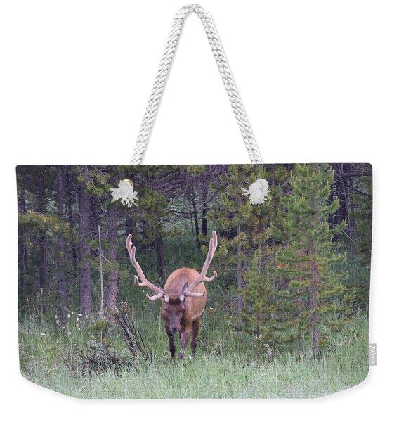 Bull Elk Rmnp Co Weekender Tote Bag