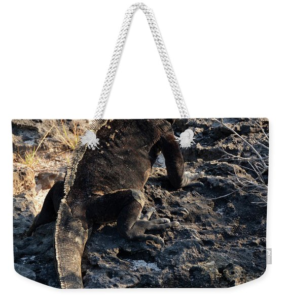 Marine Iguana, Amblyrhynchus Cristatus Weekender Tote Bag