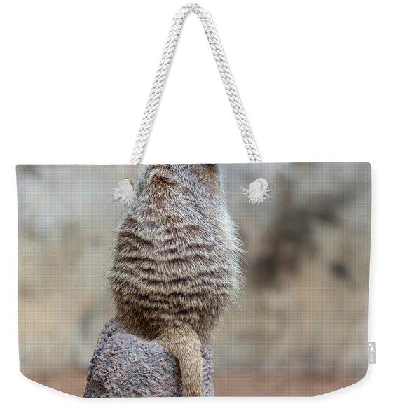 Meerkat Sitting And Looking Right Weekender Tote Bag