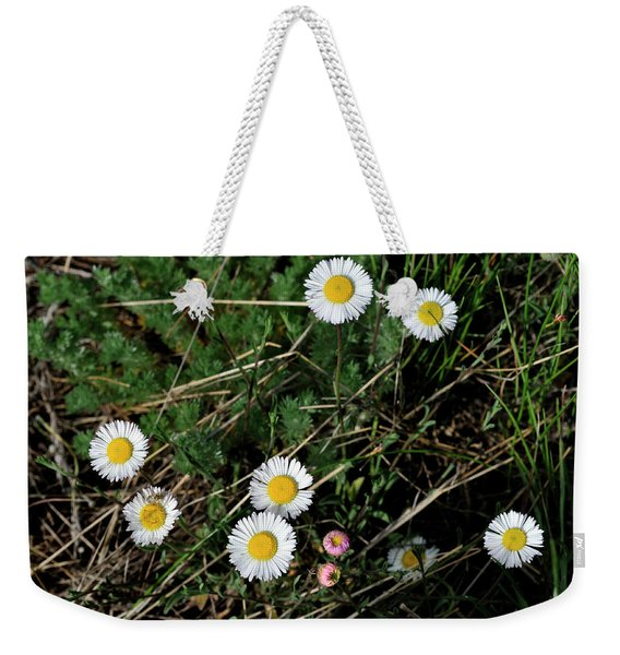 Weekender Tote Bag featuring the photograph Mini Daisies by Ron Cline