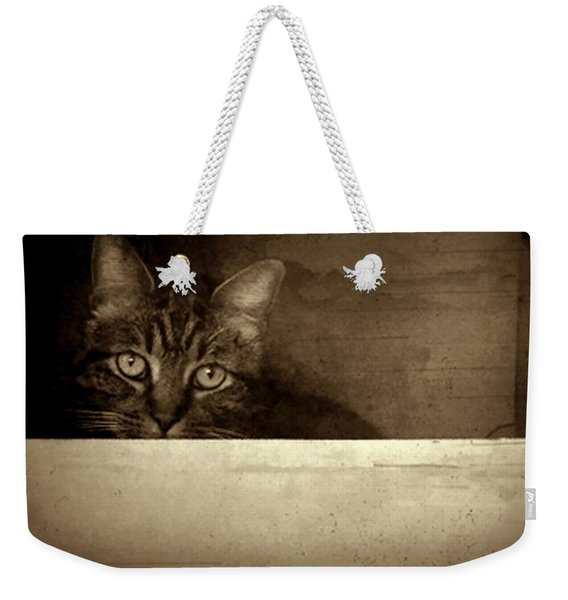 Weekender Tote Bag featuring the photograph Mollie In A Box by Patricia Strand