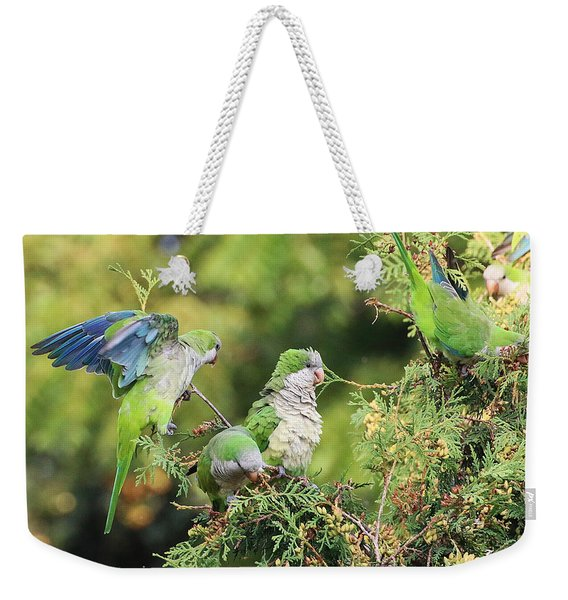 Weekender Tote Bag featuring the photograph Monk Parakeets Feeding On Evergreens 2 by William Selander
