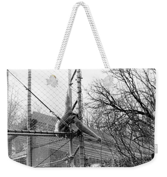 Monkey Grab  Weekender Tote Bag