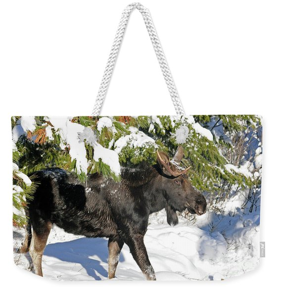 Moose In Snow Weekender Tote Bag