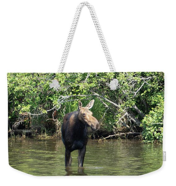 Weekender Tote Bag featuring the photograph Moose Wading by Sally Sperry