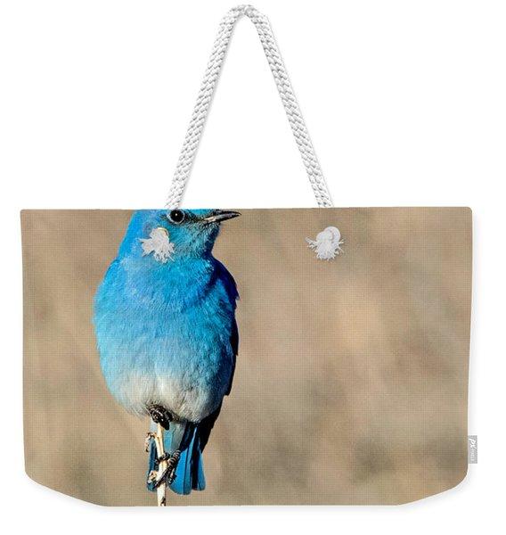 Mountain Bluebird On A Stem. Weekender Tote Bag