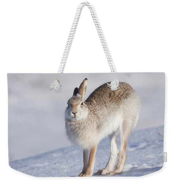 Mountain Hare In The Snow - Lepus Timidus  #2 Weekender Tote Bag