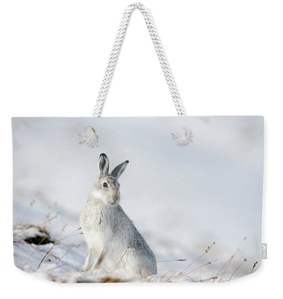 Mountain Hare Sitting In Snow Weekender Tote Bag