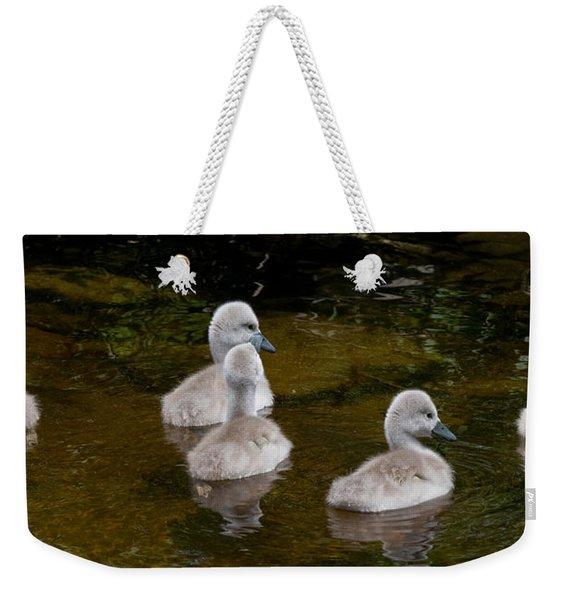 Mute Swan Babes Weekender Tote Bag