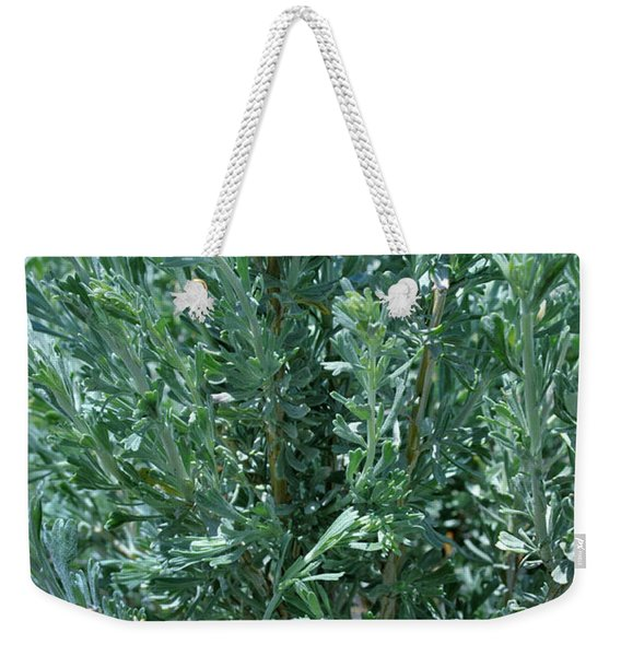 Weekender Tote Bag featuring the photograph New Sage by Ron Cline