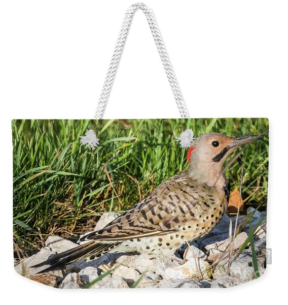 Northern Flicker In The Backyard Weekender Tote Bag