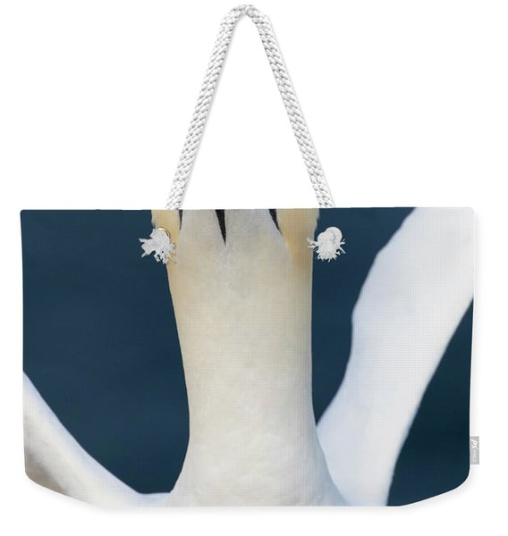 Northern Gannet Stretching Its Wings Weekender Tote Bag