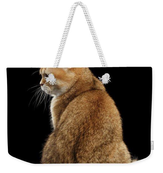 offended British cat Golden color Weekender Tote Bag