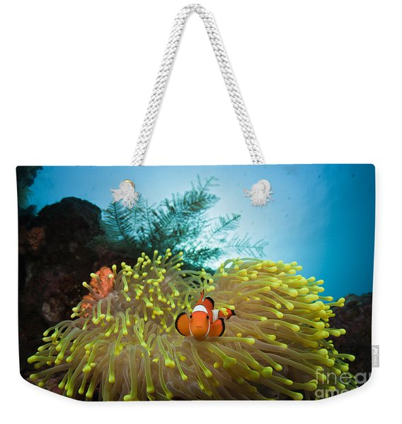 Orange Clownfish Weekender Tote Bag