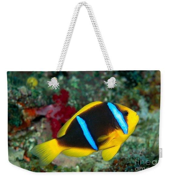 Orange-fin Anemonefish Weekender Tote Bag