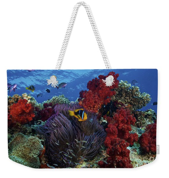 Orange-finned Clownfish And Soft Corals Weekender Tote Bag
