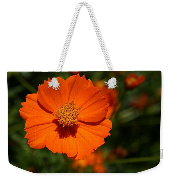 Orange Sulfur Cosmos Flower Weekender Tote Bag