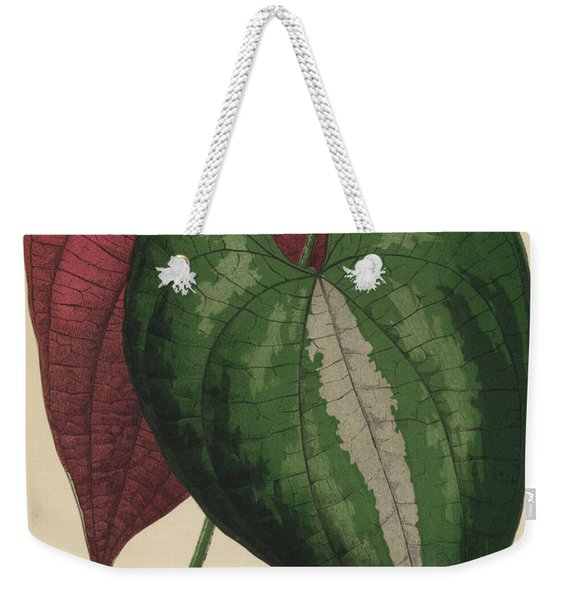 Ornamental Yam  Dioscorea Discolor Weekender Tote Bag