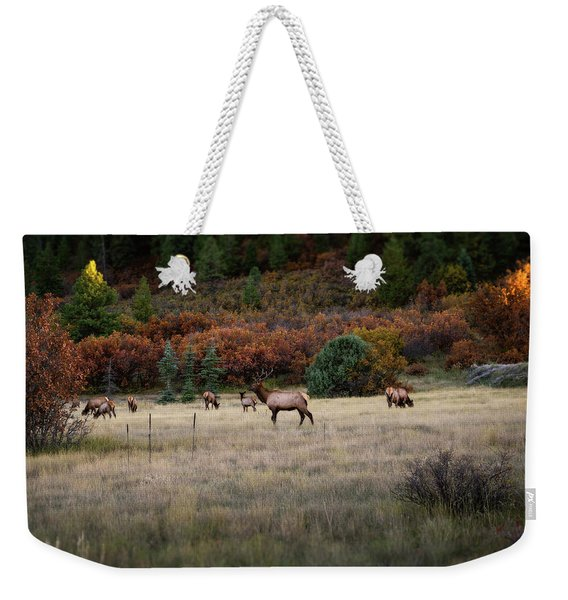 Weekender Tote Bag featuring the photograph Pagosa Autumn Elk by Jason Coward