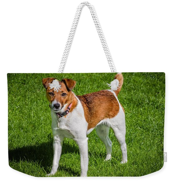 Weekender Tote Bag featuring the photograph Parson Jack Russell by Nick Bywater