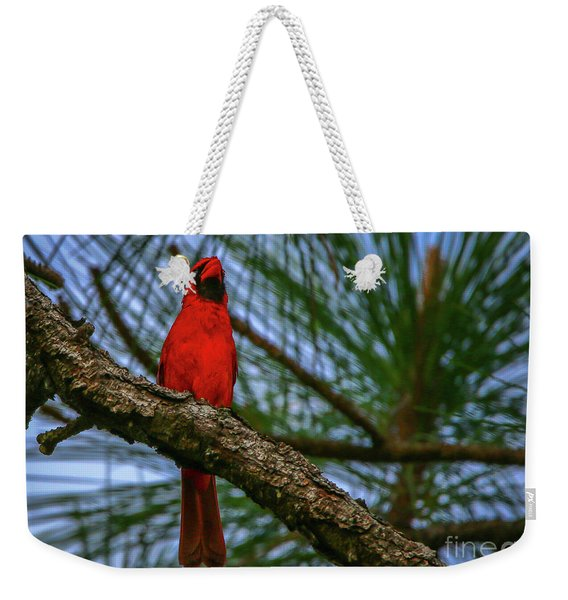 Weekender Tote Bag featuring the photograph Perched Cardinal by Tom Claud