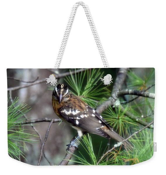 Perched In The White Pine Weekender Tote Bag
