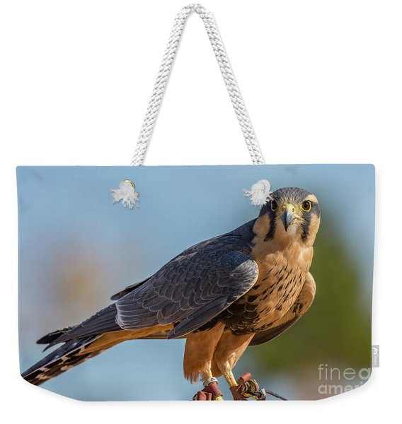 Peregrine Falcon Wildlife Art By Kaylyn Franks Weekender Tote Bag