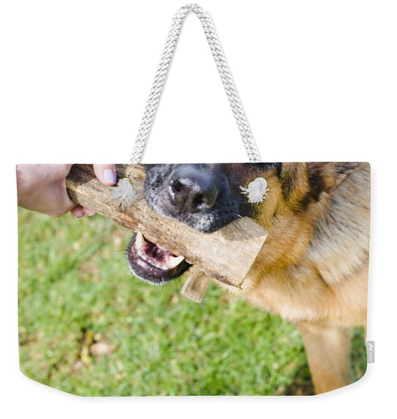 Pet Dog In Park Playing Tug Of War Game With Owner Weekender Tote Bag