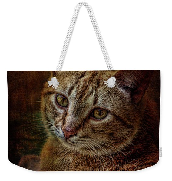 Pets Fat Cat Portrait 2 Weekender Tote Bag