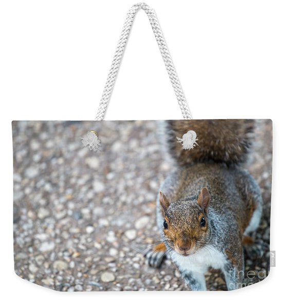 Photo Of Squirel Looking Up From The Ground Weekender Tote Bag
