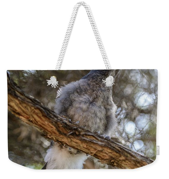 Pied Currawong Chick 1 Weekender Tote Bag