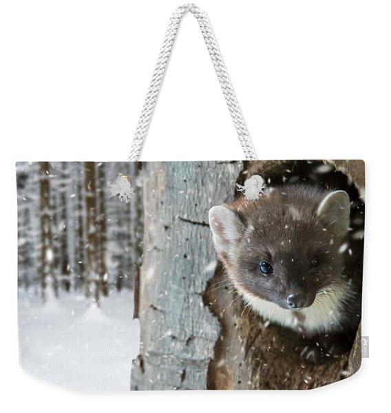 Pine Marten In Tree In Winter Weekender Tote Bag