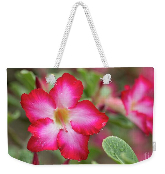 Weekender Tote Bag featuring the photograph Pink Desert Rose Flower by Charmian Vistaunet