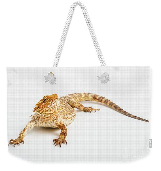 Weekender Tote Bag featuring the photograph Pogona Isolated by Benny Marty