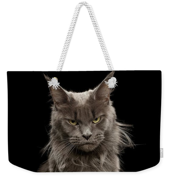Portrait Of Angry Maine Coon On Black Weekender Tote Bag
