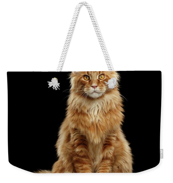 Portrait Of Ginger Maine Coon Cat Isolated On Black Background Weekender Tote Bag