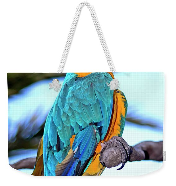 Weekender Tote Bag featuring the photograph Pretty Parrot by Carolyn Marshall