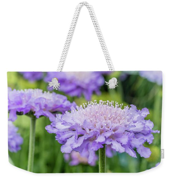 Weekender Tote Bag featuring the photograph Pretty Purple by Nick Bywater