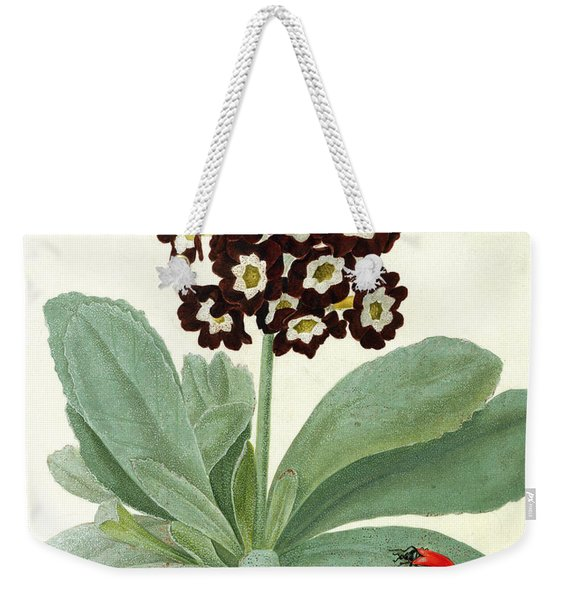 Primula Auricula With Butterfly And Beetle Weekender Tote Bag