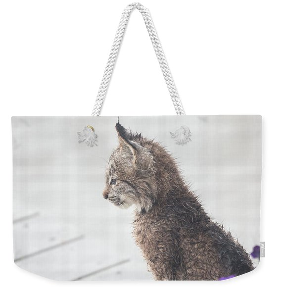 Weekender Tote Bag featuring the photograph Profile In Kitten by Tim Newton