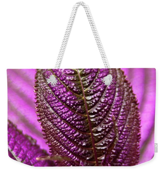 Weekender Tote Bag featuring the photograph Purple Coleus by Carolyn Marshall